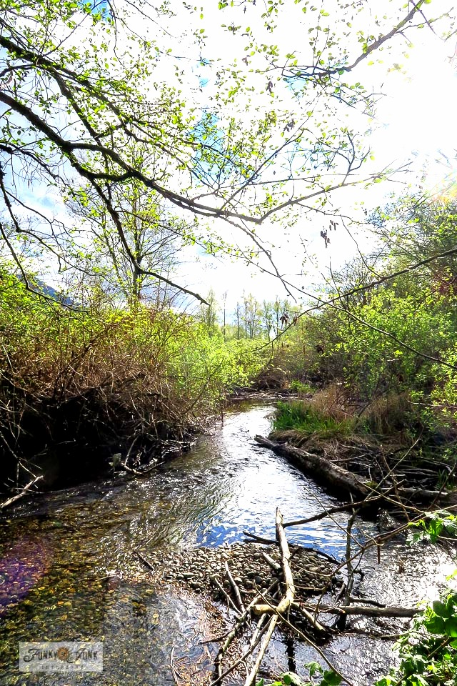 A babbling wetlands creek during a bike ride along the Vedder River Rotary Trail in Chilliwack, BC Canada. Part of - How to figure out a selfish desire vs. a true calling. Click to read the story.