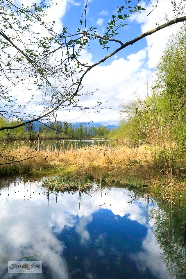 A Blue Heron Reserve wetlands during a bike ride along the Vedder River Rotary Trail in Chilliwack, BC Canada. Part of - How to figure out a selfish desire vs. a true calling. Click to read the story.