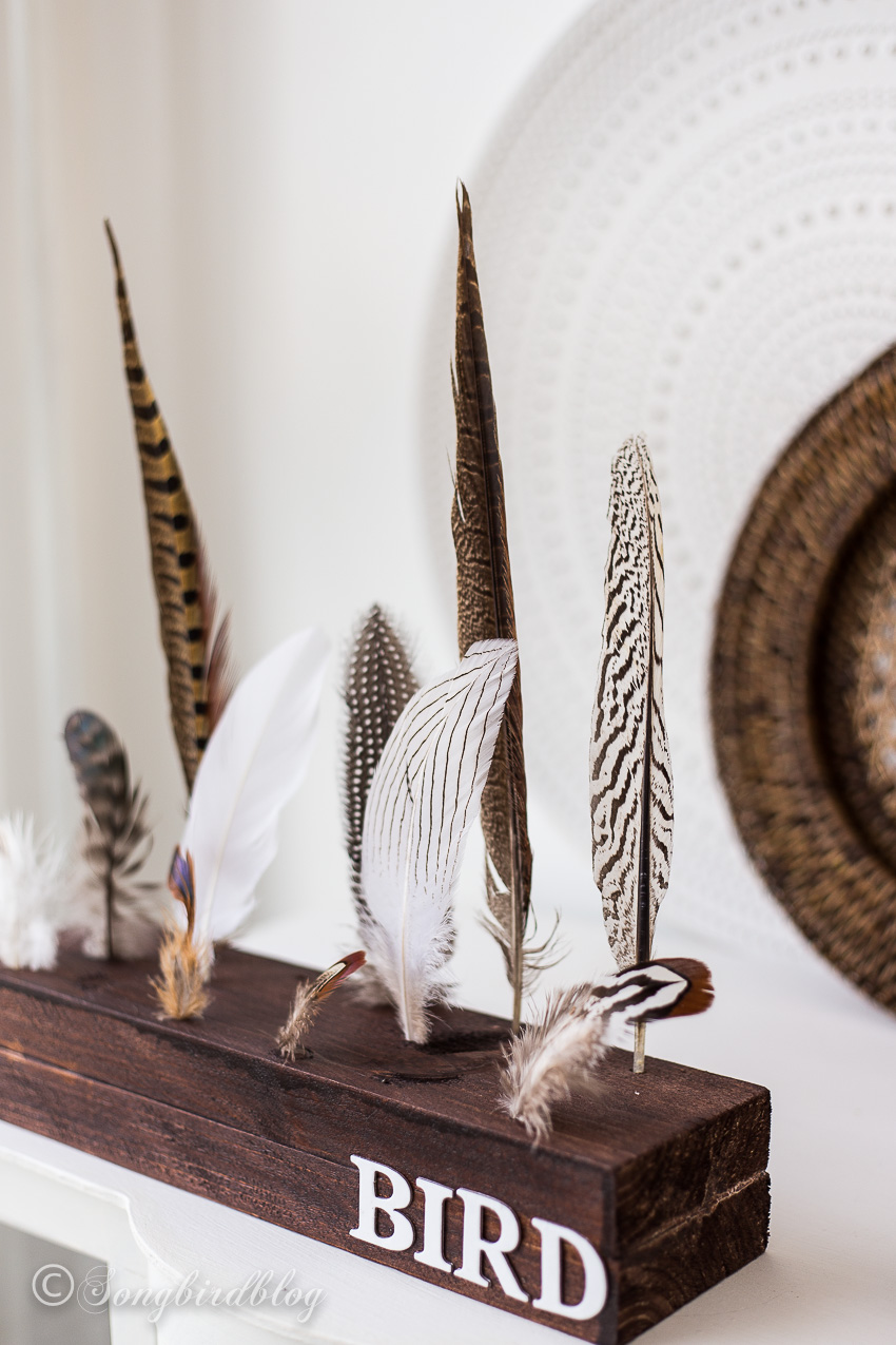 Feather display by Songbird, featured on Funky Junk Interiors