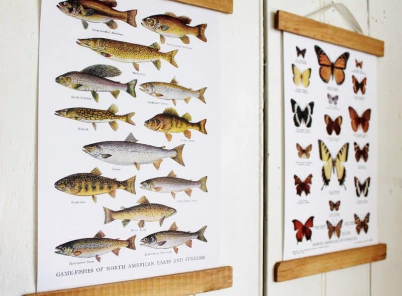 Specimen wall chart artwork by Adirondack Girl At Heart, featured on Funky Junk Interiors