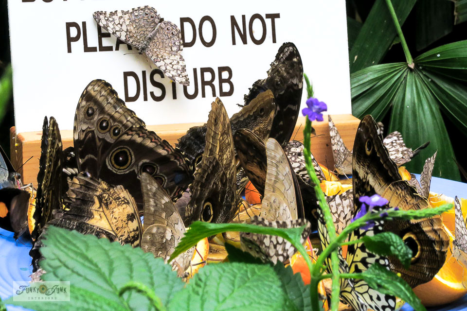 Take in a trip to Niagara Parks Butterfly Conservatory. A tropical indoor paradise with thousands of butterflies, near Niagara Falls, Ontario, Canada.