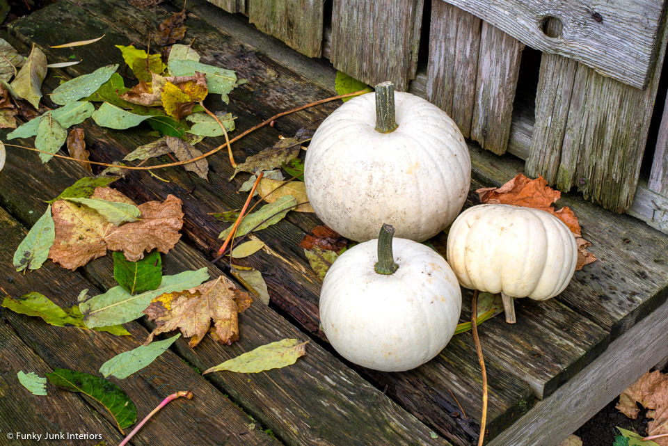 Take a tour of the rustic garden shed during fall. With a vintage bike, white pumpkins, and grapevine leaves in fall tones offering a spectacular show!