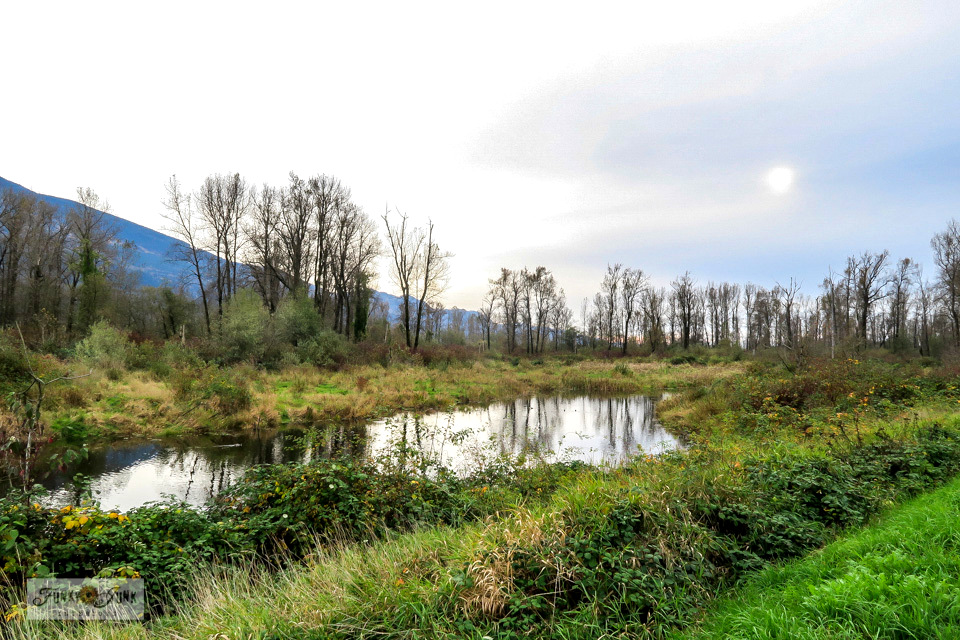 A view of the wetlands with ducks and geese, part of a moody, gorgeous fall trail bike ride along the Vedder River Rotary Trail in Chilliwack, BC Canada