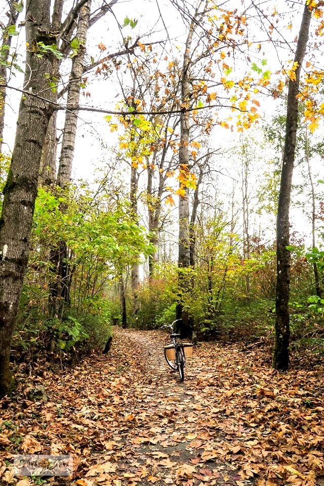 A leaf covered trail, part of a moody, gorgeous fall trail bike ride along the Vedder River Rotary Trail in Chilliwack, BC Canada