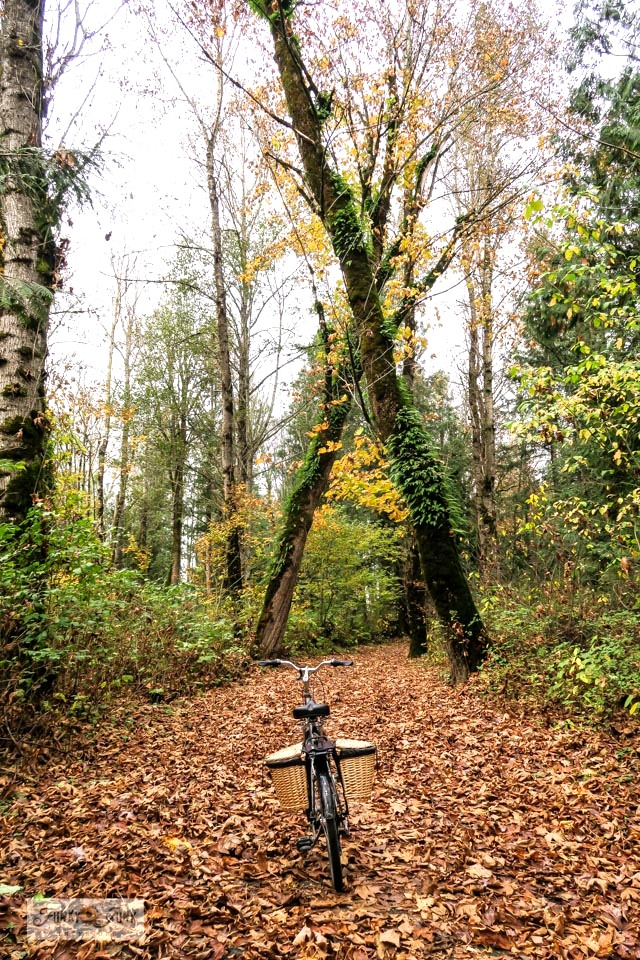 A leaf covered forest trail, part of a moody, gorgeous fall trail bike ride along the Vedder River Rotary Trail in Chilliwack, BC Canada
