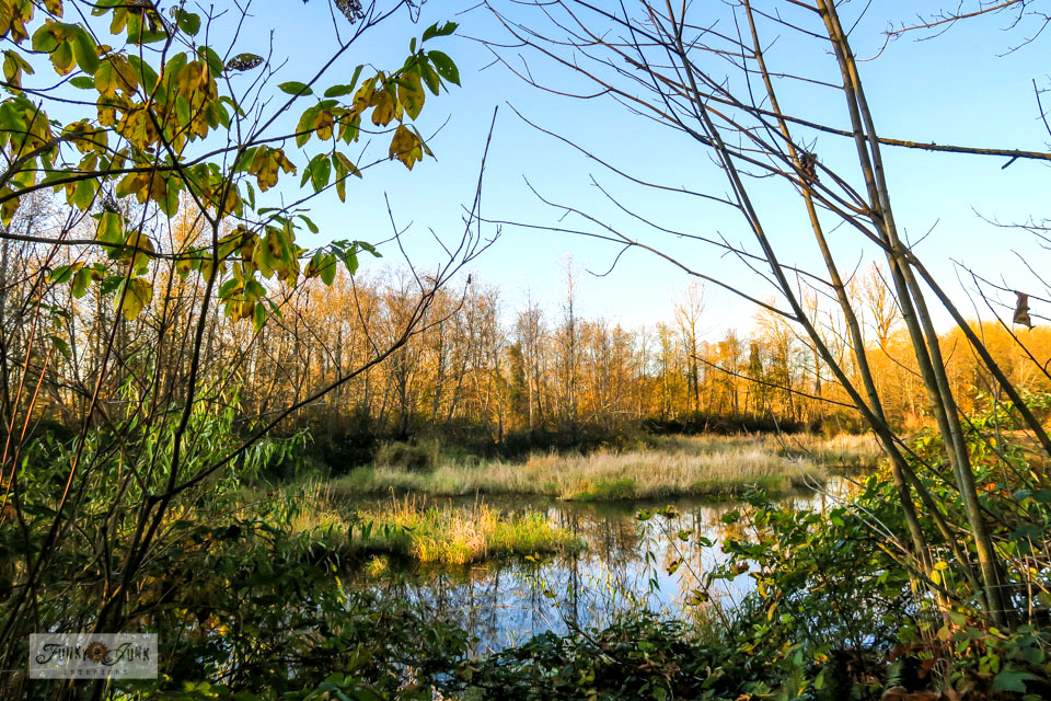 A fall view of the wetlands, part of a moody, gorgeous fall trail bike ride along the Vedder River Rotary Trail in Chilliwack, BC Canada