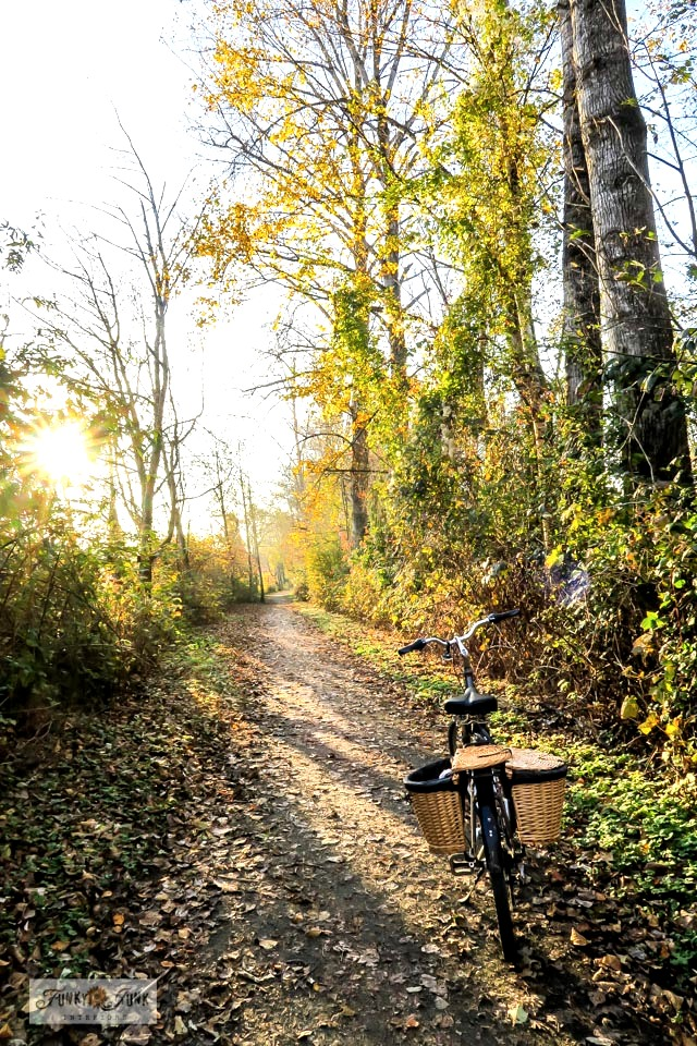 A moody, gorgeous fall trail bike ride along the Vedder River Rotary Trail in Chilliwack, BC Canada