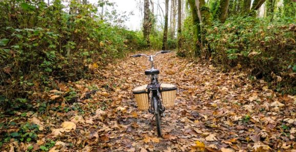 moody fall bike ride on the vedder river rotary trail in Chilliwack, BC