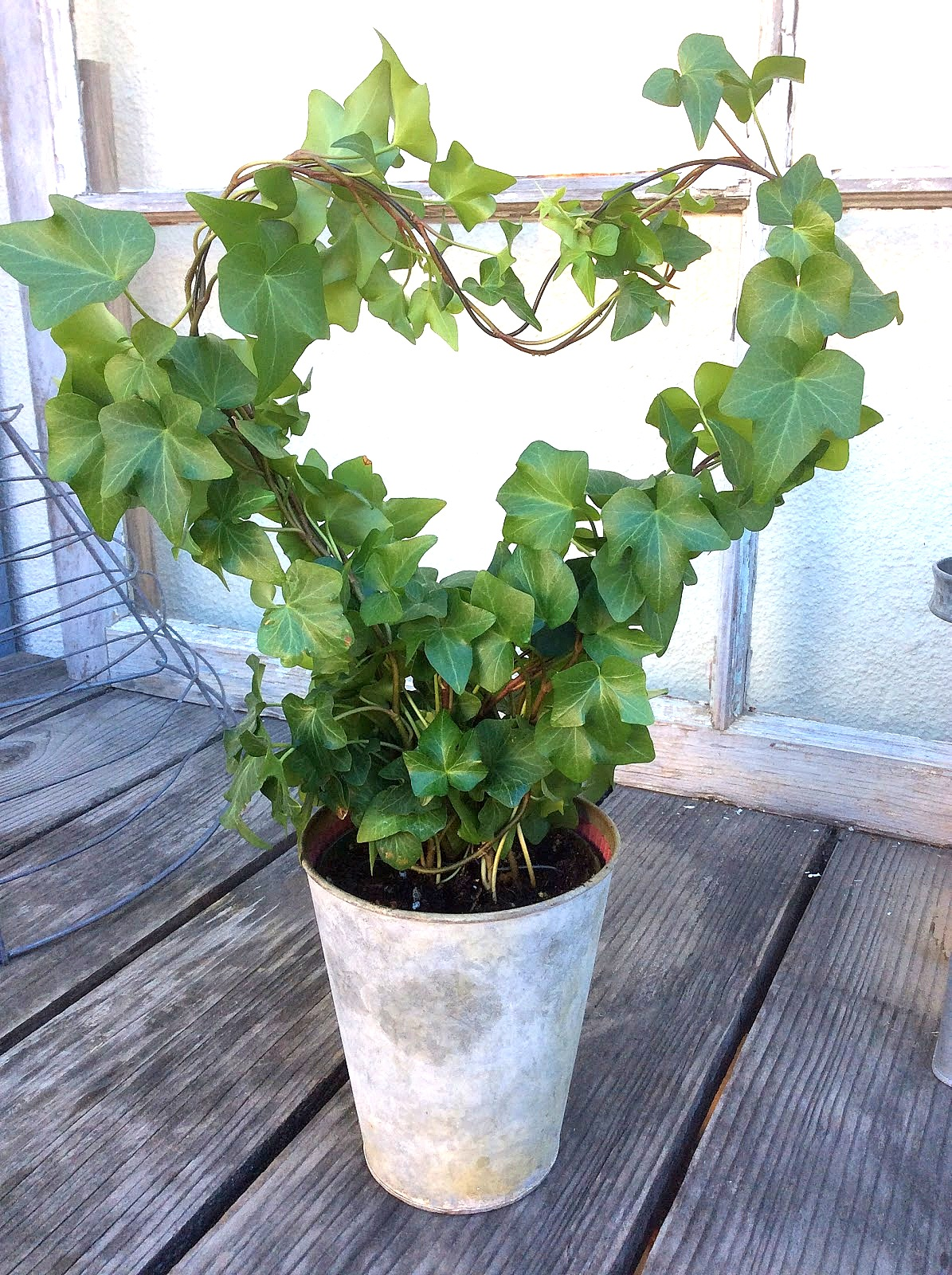 Heart shaped ivy plant by Fresh Vintage By Lisa S, featured on DIY Salvaged Junk Projects 513 on Funky Junk!