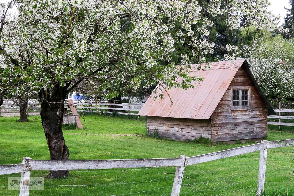 A rustic shed with flowering tree in the country during a bike ride