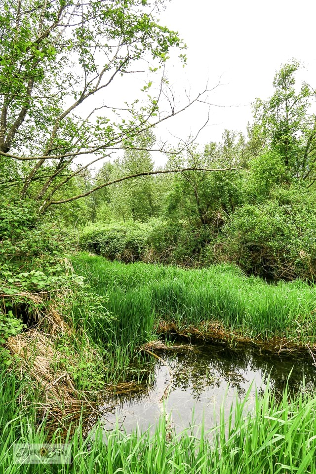 A view of the wetlands from the Vedder River Rotary Trail during a spring bike ride. #bc #canada #trails #biking