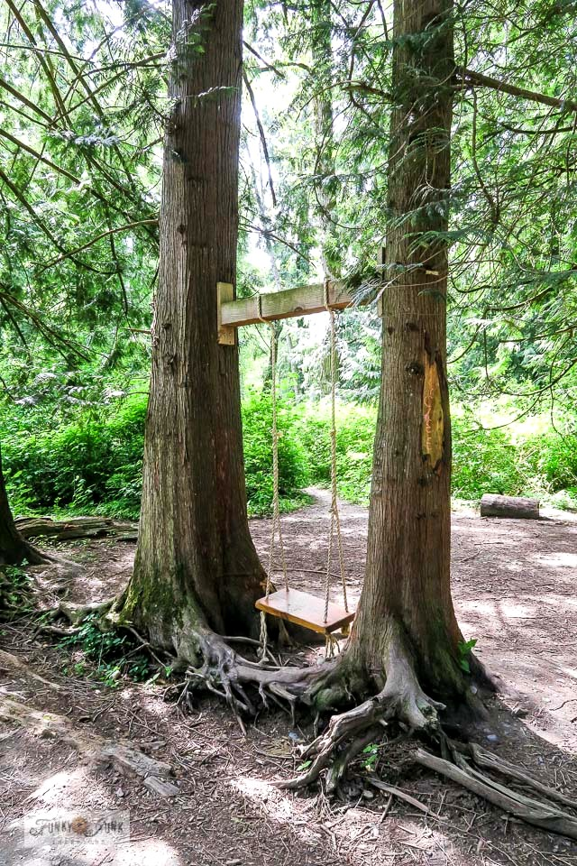 A rustic swing in the middle of a forest hung from two trees along the Vedder River Rotary Trail during a bike ride. #swing #rustic #forest #trails #bc