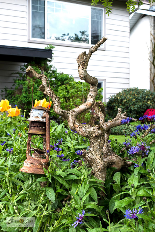 A squiggly bush trunk becomes a hanger for a garden art lantern in a flowerbed filled with bachelor buttons. Take the full yard tour!