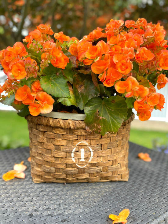 Vintage crock numbered begonia basket by Homeroad, featured on DIY Salvaged Junk Projects 535 on Funky Junk!