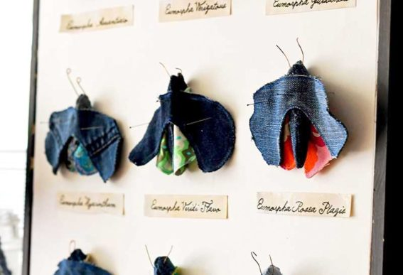 denim moth specimens by Pillar Box Blue