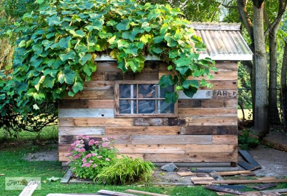 shed - adding reclaimed wood siding and shingles