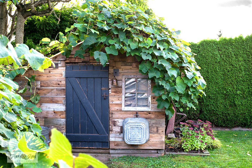 Learn how building a barn door for a rustic shed with reclaimed wood and rusty junk hardware really woke this little rustic garden shed up! Includes how to side a shed with reclaimed wood. Click to full tutorial with many more how-to pictures!
