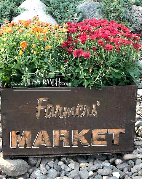 Farmers' Market fall mum crate by Bliss Ranch, featured on DIY Salvaged Junk Projects 547 on Funky Junk!