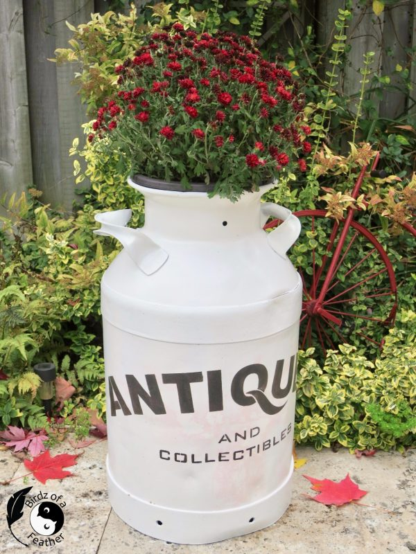 Milk can antiques planter by Birdz of a Feather, featured on DIY Salvaged Junk Projects 551 on Funky Junk!
