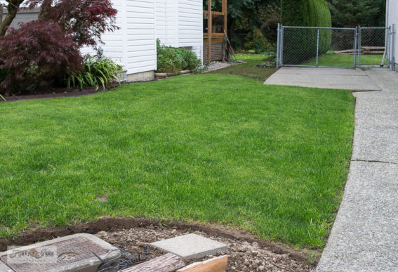 growing a new lawn from seed