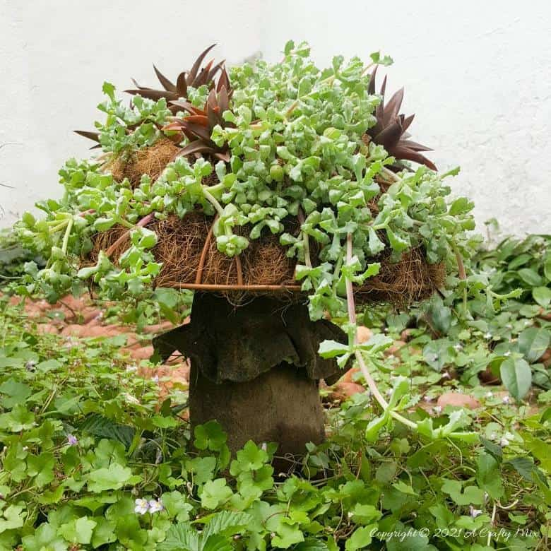 Wire basket mushroom succulent planter by A Crafty Mix, featured on DIY Salvaged Junk 599 on Funky Junk!