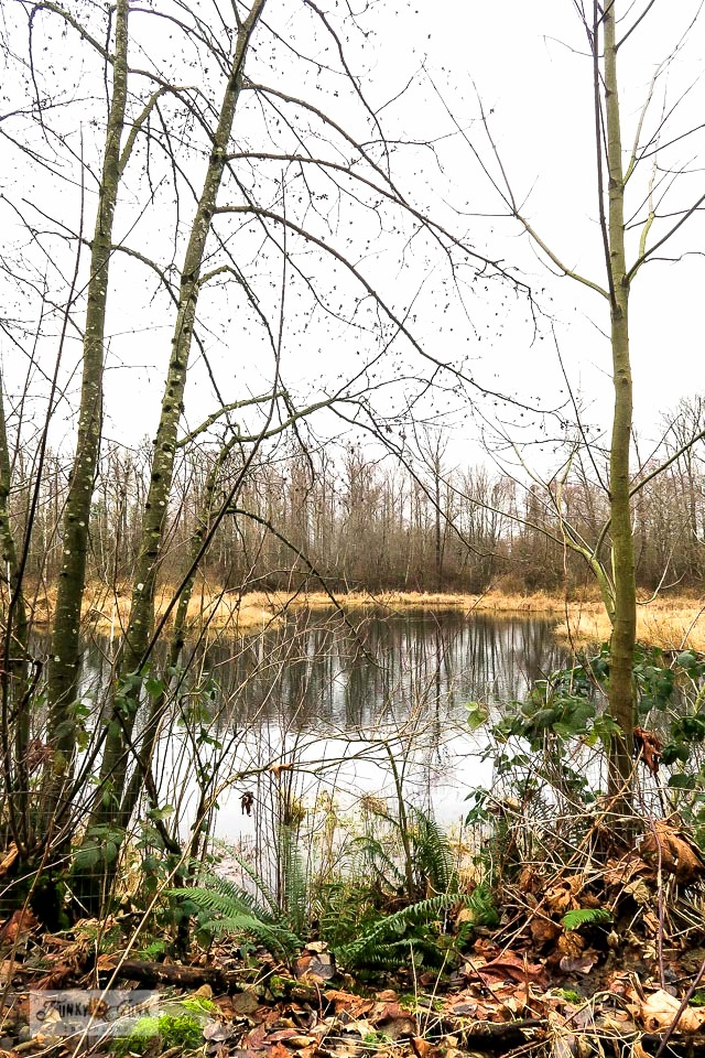A beautiful wetlands view along Browne Creek Wetlands trail, along the Vedder River Rotary Trail in Chilliwack, BC Canada.