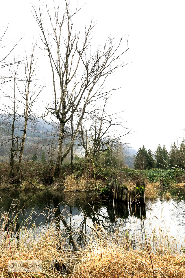 A quiet spot in Browne Creek Wetlands, part of a moody winter trail bike ride down the Vedder River Rotary Trail during January.