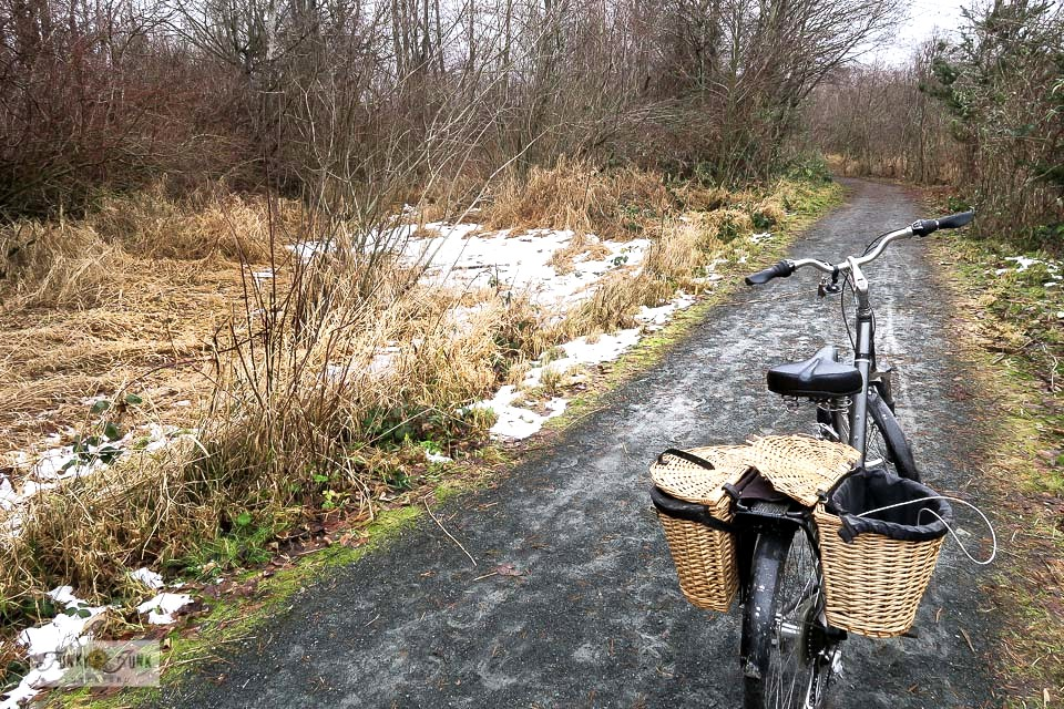 The last of the snow along Browne Creek Wetlands, along the Vedder River Rotary Trail in Chilliwack, BC Canada.