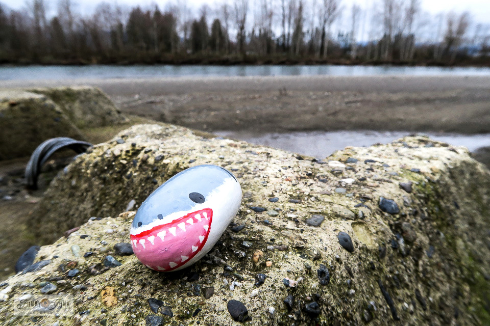 A painted shark rock sighting along the Vedder River Rotary Trail during a winter bike ride.