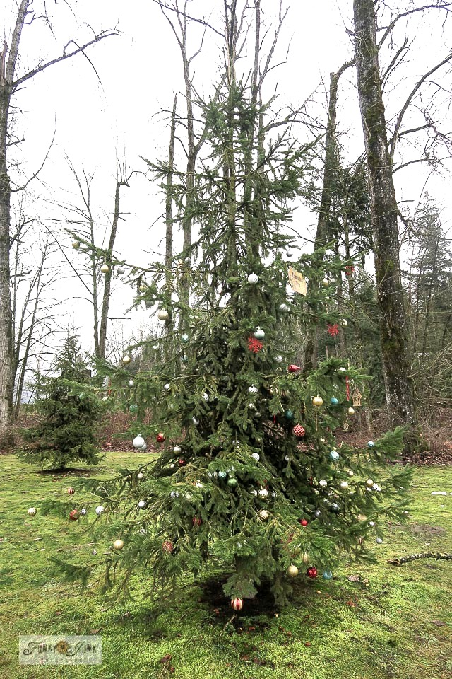 A Christmas decorated evergreen tree at Vedder Park, along the Vedder River Rotary Trail in Chilliwack, BC, Canada.