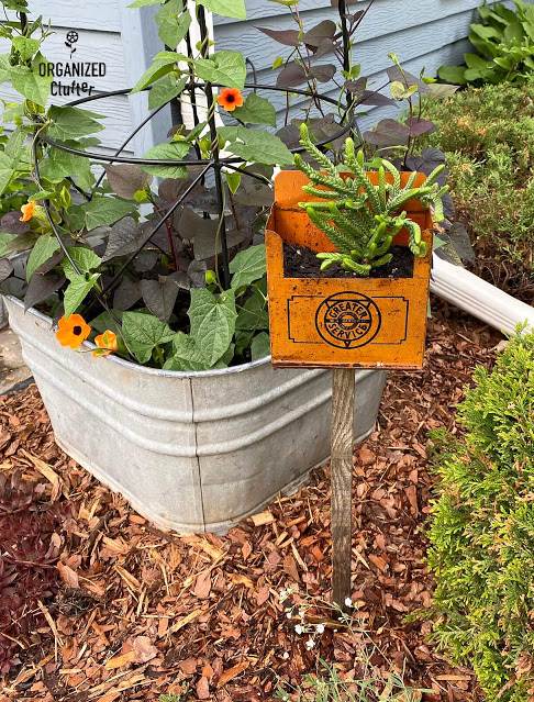 Vintage oil metal planter by Organized Clutter, featured on New Upcycled Projects to Make 582 on Funky Junk!