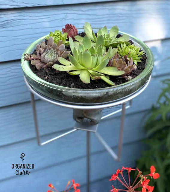 Insulator succulent planter by Organized Clutter, featured on New Upcycled Projects to Make 586!