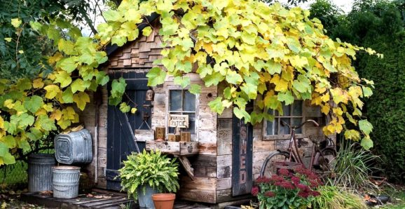 fall leaves on rustic garden shed tour
