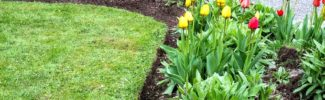 How to professionally edge flowerbeds-004